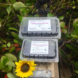 Fresh Aronia for sale